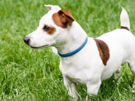 Miglior collare antiparassitario per cani