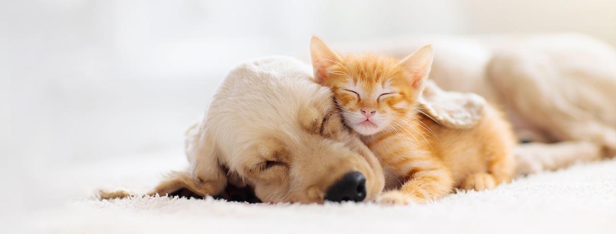 collare anti pulci per cane e gatto