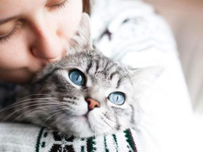 prendersi cura di un gatto