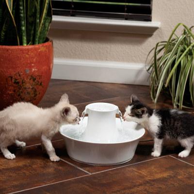 prendersi cura di un gatto Fontana acqua