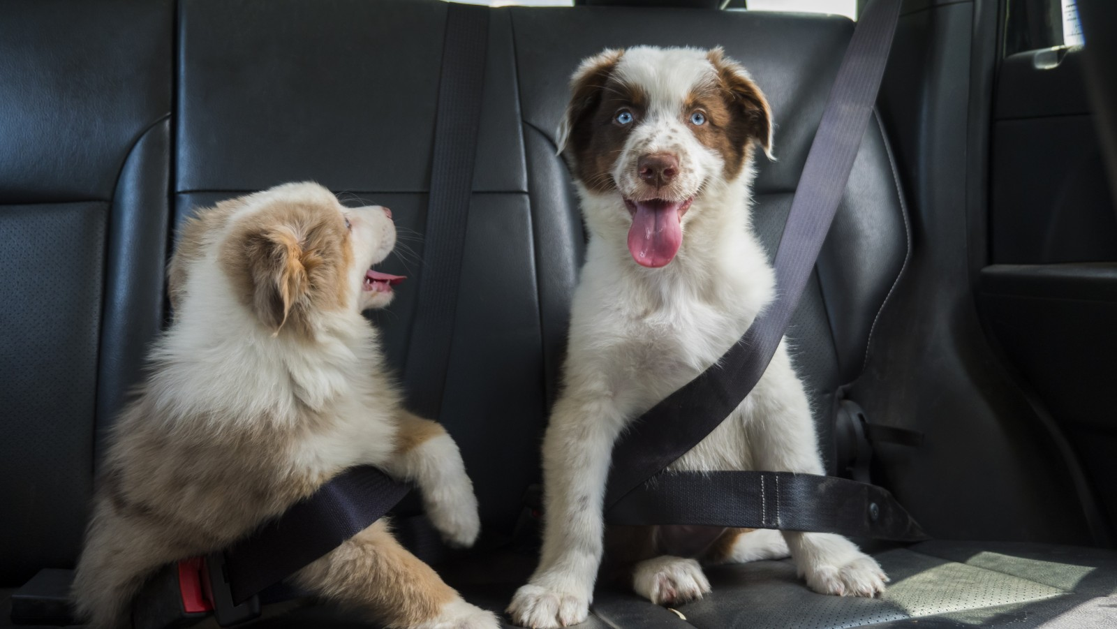 Migliore assicurazione cani